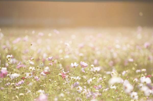 粉色的花朵高清壁紙