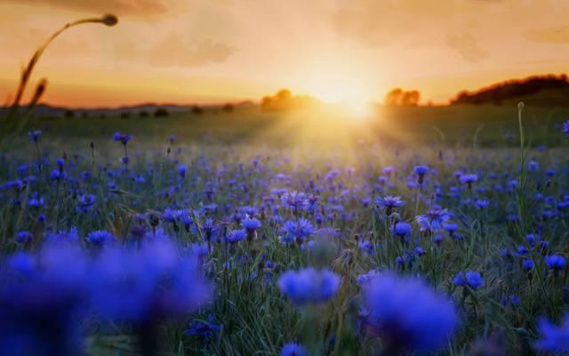 鲜花,早上,性质