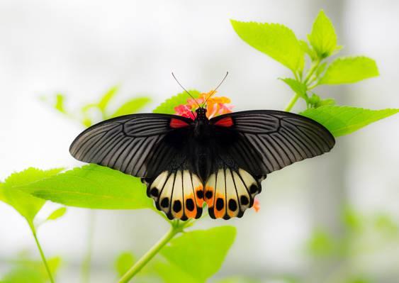 散景,宏,蝴蝶