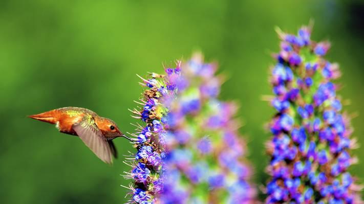 棕色的鸟,mariposa高清壁纸浅焦点摄影
