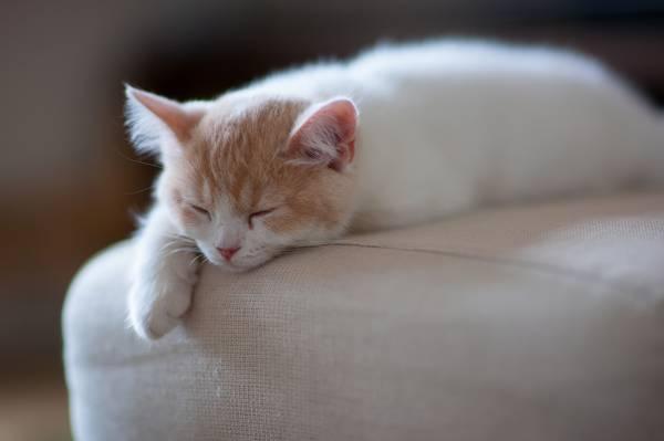 凯蒂,©Ben Torode,汉娜,睡觉