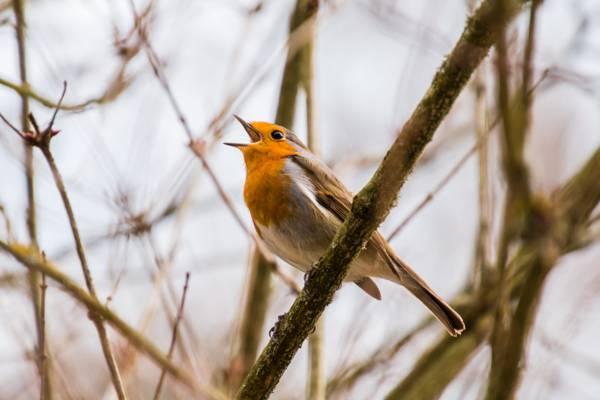 棕色和白色的鸟,在白天高清壁纸棕色分支