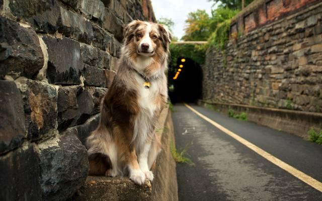 狗,路,每个