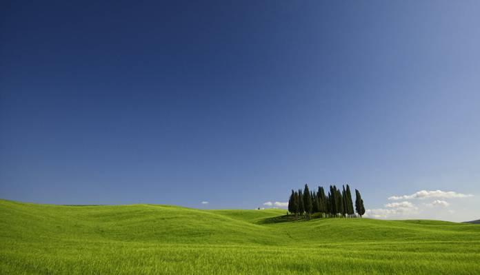 松树种植在草地中间在白天,瓦尔d'orcia高清壁纸