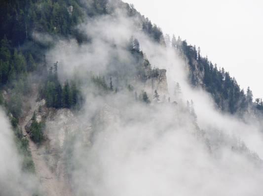 森林山雾白天高清壁纸