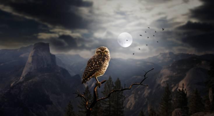 森林,岩石,晚上,鸟,剪影,月亮,树木,猫头鹰,艺术,山,分支