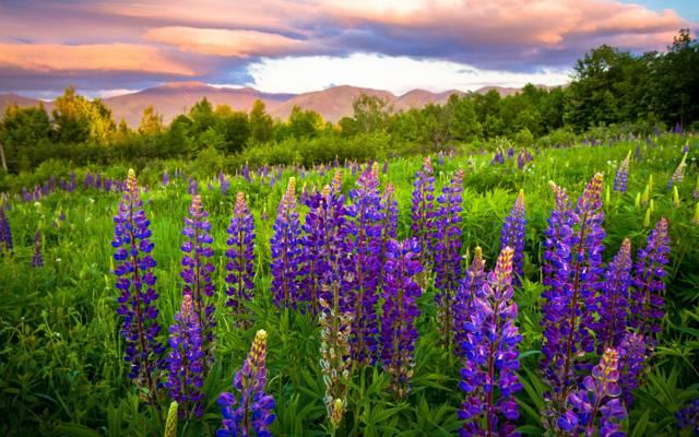 花,天空,草,山,云