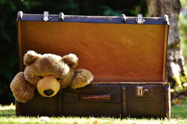 棕色毛皮玩具棕色公文包在绿草地上高清壁纸