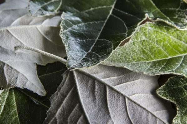 绿色的树叶高清壁纸的特写照片