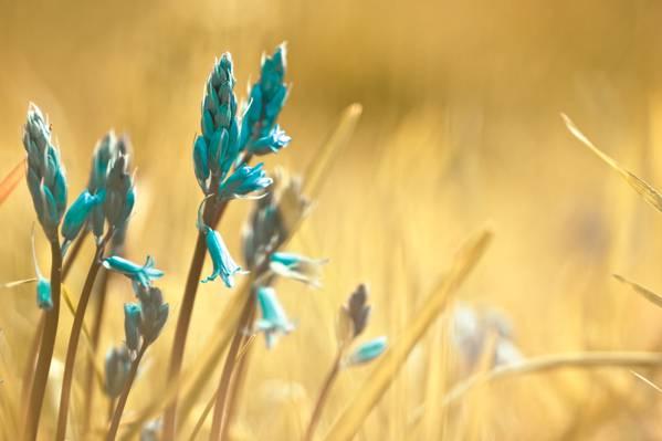 深蓝色的花在白天高清壁纸的浅焦点摄影