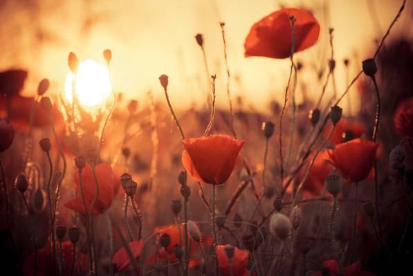 真希,太阳,热,花