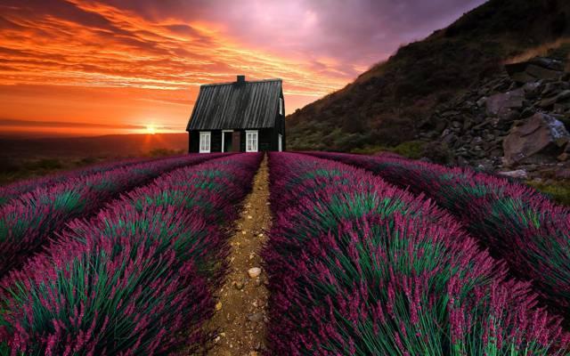 日落,景观,自然,植被,山,房子