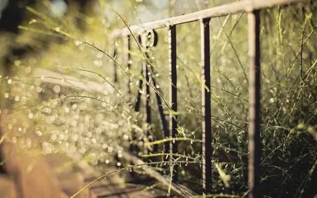 宏观,围栏,草地