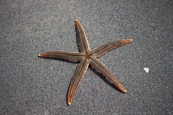 棕色星鱼高清壁纸的照片