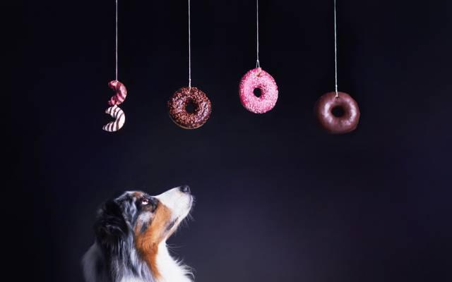 背景,百吉饼,狗
