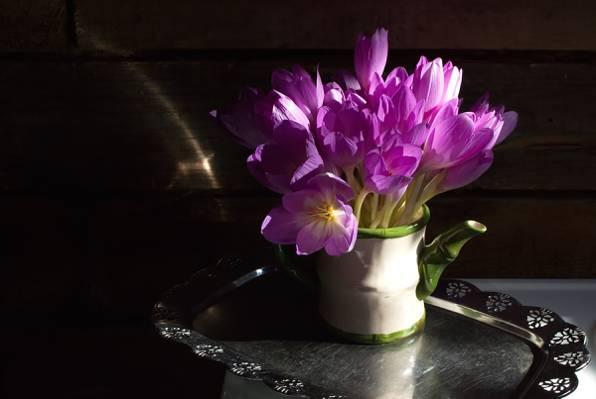 托盘,花束,Krokus,藏红花