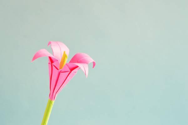 粉红色的4朵花高清壁纸