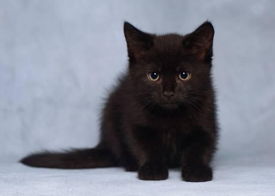 黑色的小猫,看,小猫,背景,宝贝