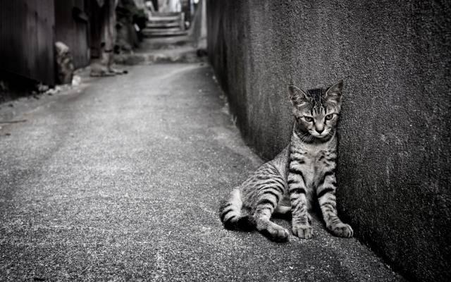 猫,街头,寂寞