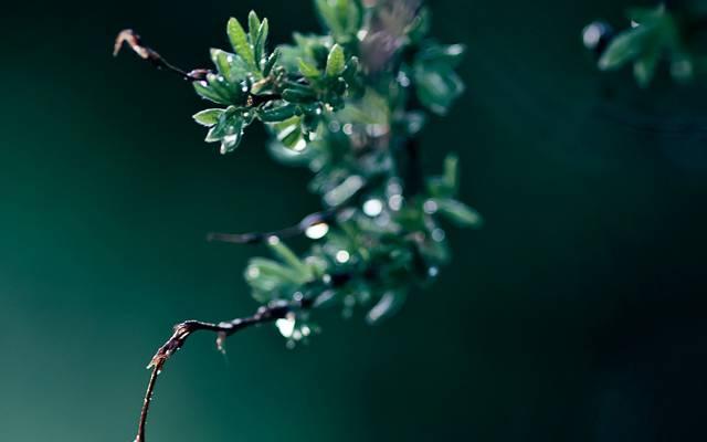 宏,分支,绿色,下降,叶子