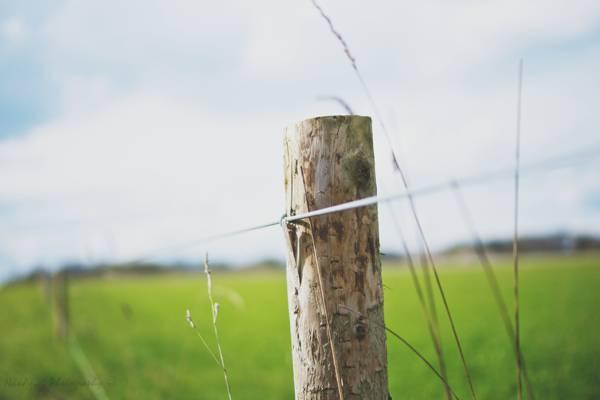 棕色木篱芭杆的浅摄影在白天高清壁纸