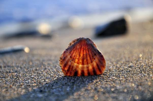 海,壳,岸,沙子