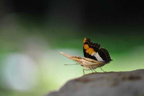 关闭黑蝴蝶,蝙蝠高清壁纸的照片