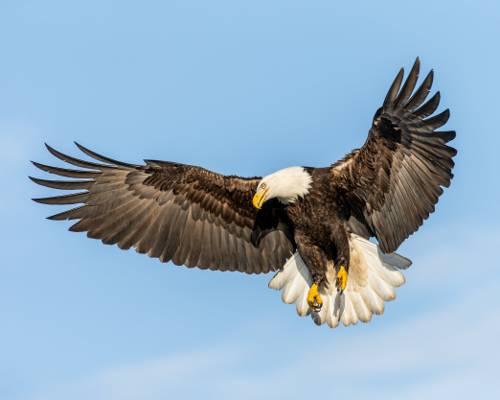 飞秃鹰高清壁纸