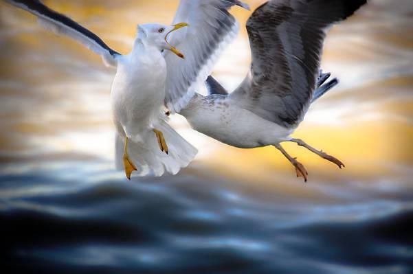两个白色和黑色的鸟高清壁纸的浅焦点照片