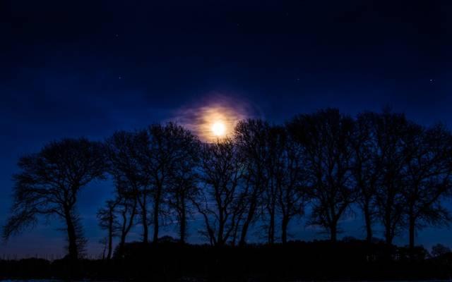 月亮,树木,夜晚,星星,剪影