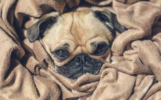 狗,小狗,小狗,狗,脸,伪装,脸,眼睛,鼻子,鼻子,眼睛,伪装