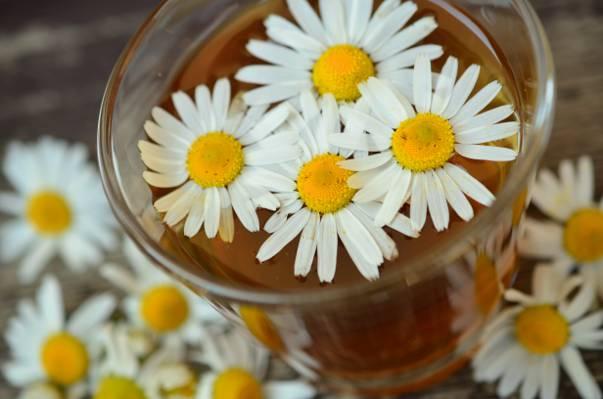 白色和黄色petaled鲜花在清澈的饮用水杯子高清壁纸
