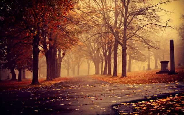 公园,阴,轨道,雾,树,秋天,树叶