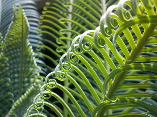 绿色的植物高清壁纸