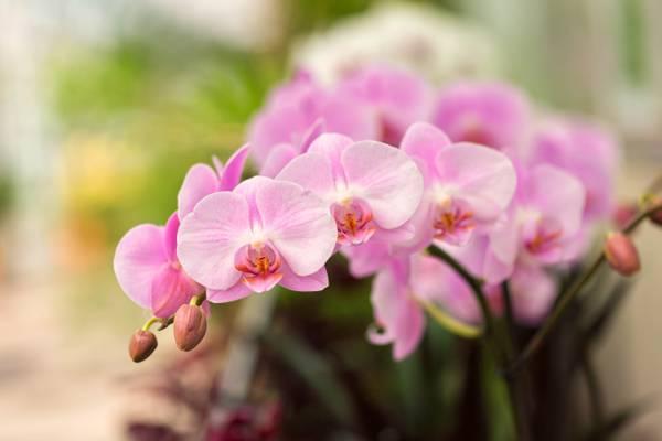 兰花花在浅焦点摄影,兰花高清壁纸