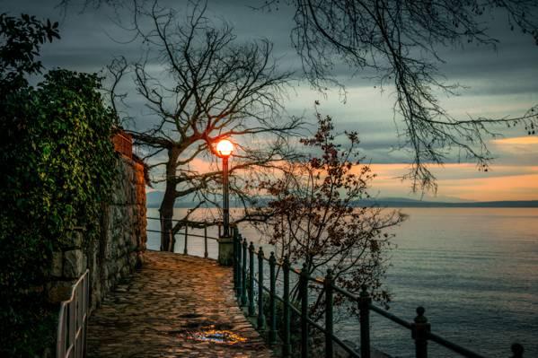 克罗地亚,树,湾,岸,晚上,灯笼,分支机构,奥帕蒂亚,奥帕蒂亚,日落