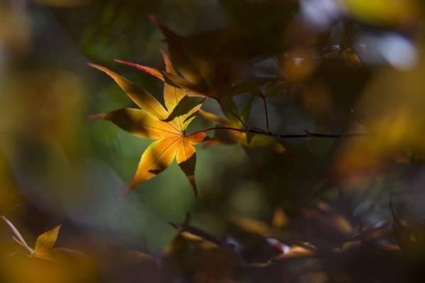 叶子,秋天,背景,性质