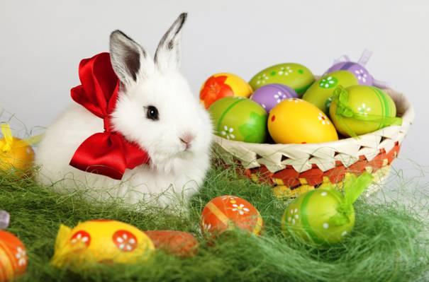 假日,兔,白,复活节,鸡蛋,复活节,弓,复活节,篮子,春天