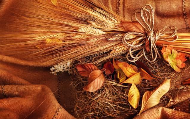 小麦,耳朵,粮食,黄色,秋天,叶子,小穗