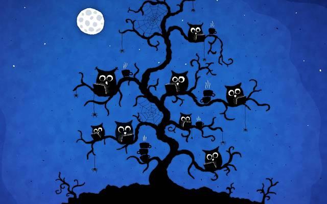 猫头鹰,咖啡,树,鸟,晚上,网站,vladstudio,蜘蛛,网吧