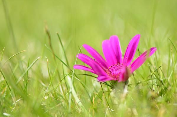 粉红玫瑰选择性焦点摄影附近草高清壁纸