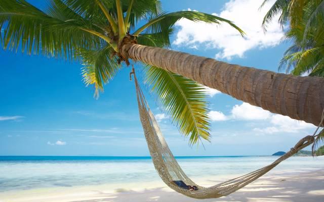 眼镜,热,海滩,度假,沙滩,海,书,帕尔马,夏天,太阳,吊床