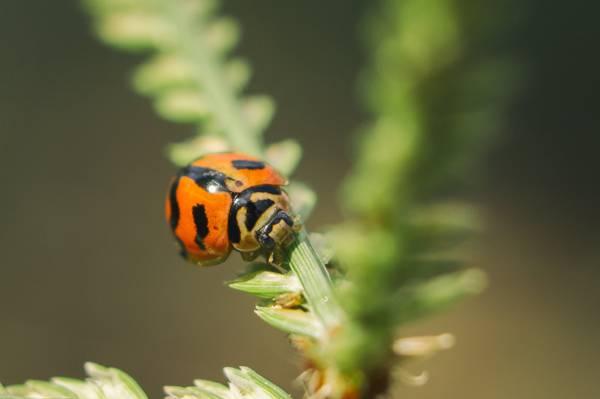 瓢虫的重点摄影,瓢虫高清壁纸