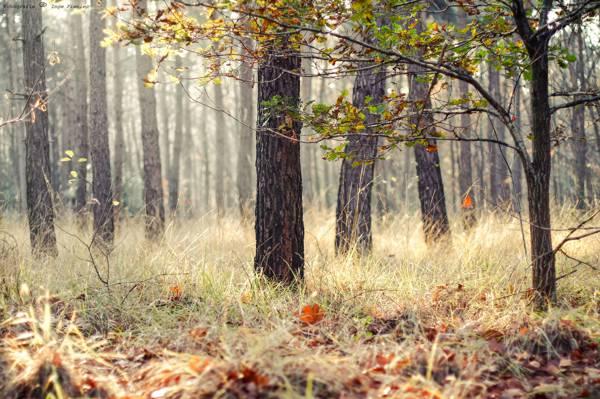 树,草,秋天,森林,叶子