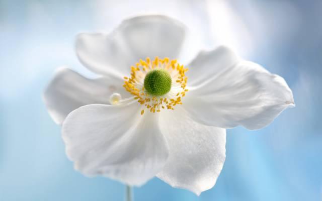 花瓣,花,性质