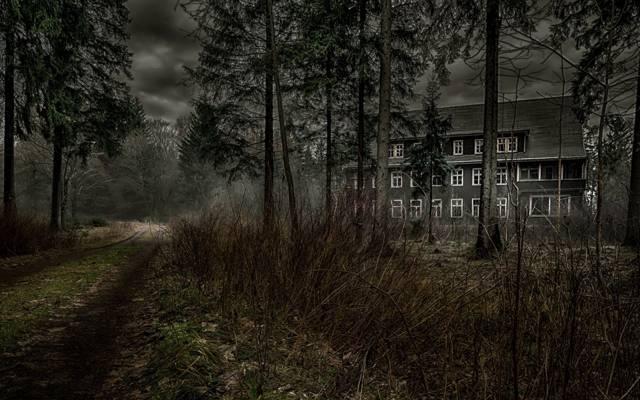 森林,房子,路,黑暗