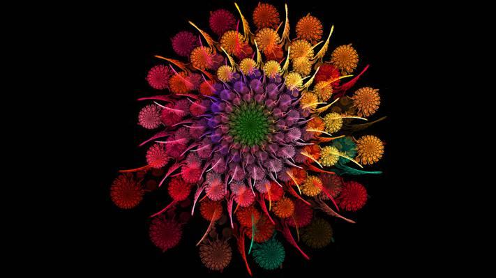 彩虹,花瓣,一轮,花束,螺旋,花