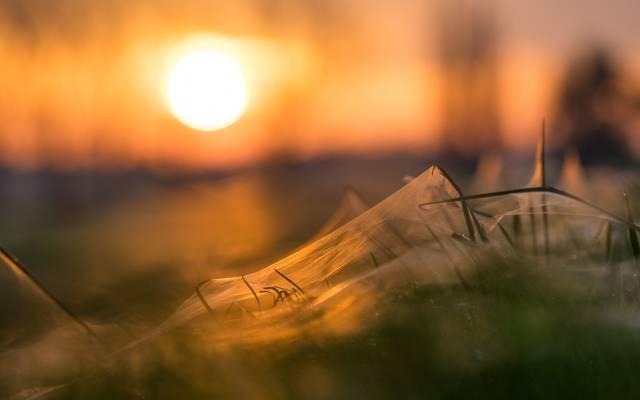 草,网,日落