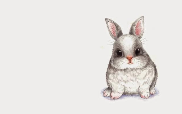 兔子,图,孩子,兔子,艺术,婴儿,铅笔,动物