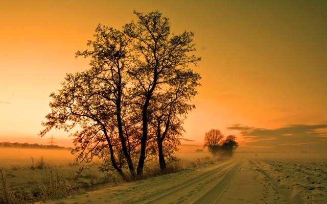 雪,冬天,雾,路,树,阴霾,阴霾,天空,日落